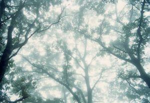 bosco1_a_70.jpg